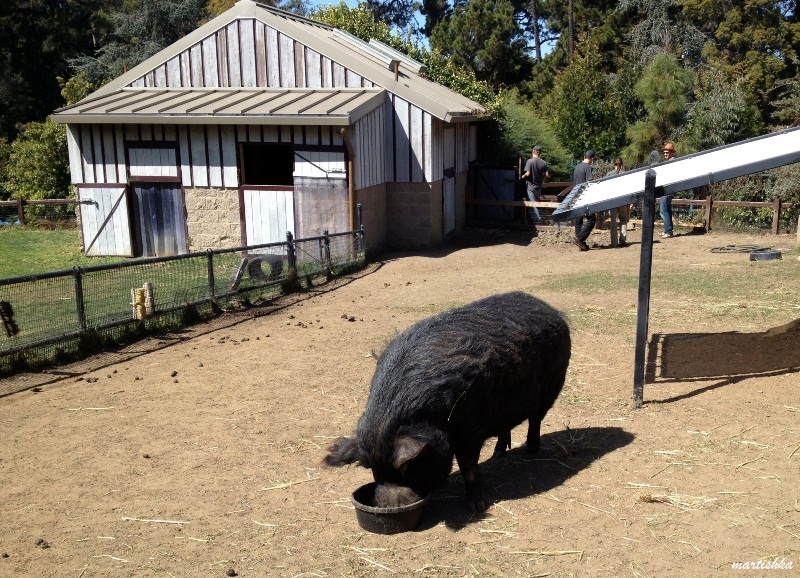 Oakland Zoo (18)