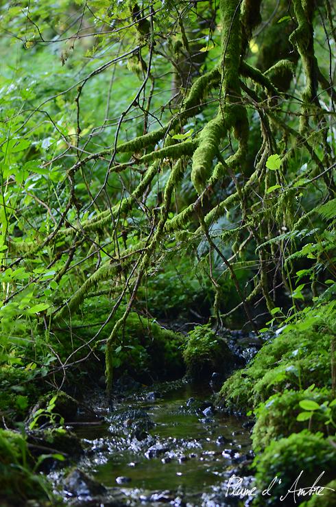 branches vertes