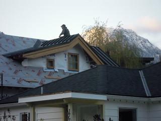 Nov 19 - getting a roof!