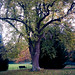 Poissy - Parc Messonier 04-145