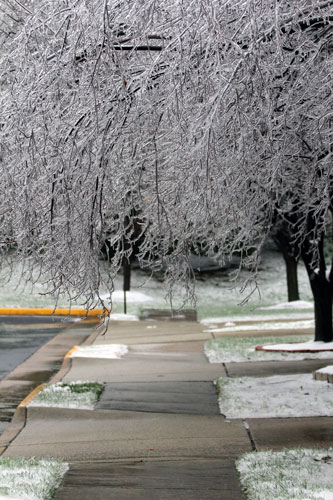 icy trees and sidewalk in my neighborhood. dec 2013