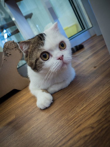 Purrfect_Cat_Cafe_Doll_Meat_19
