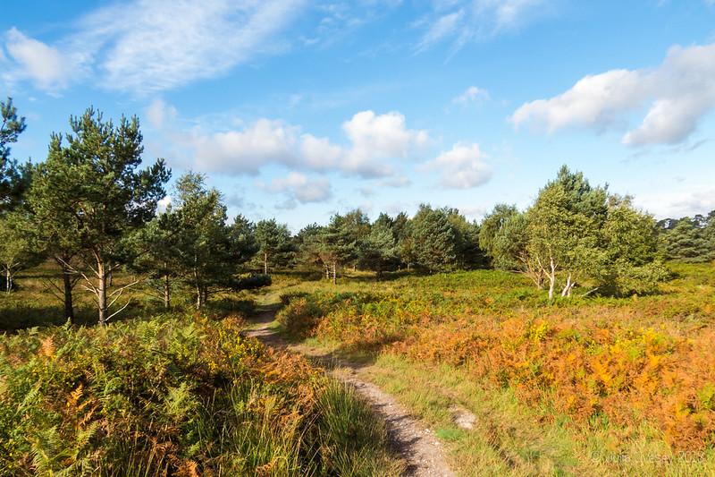 A sunny autumn morning on Canford Heath
