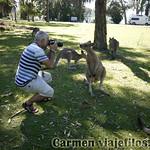 01 Viajefilos en Australia. Morriset 07