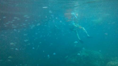 Nube de peces alrededor de chamo con chaleco salvavidas