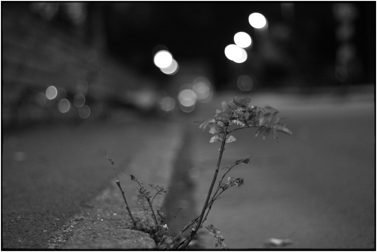Sidewalk Bush