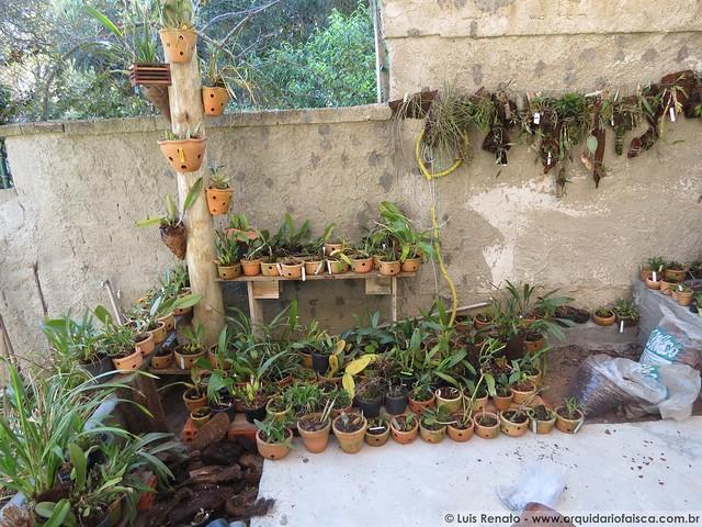 orquideas.eco.br - 10/09/2013