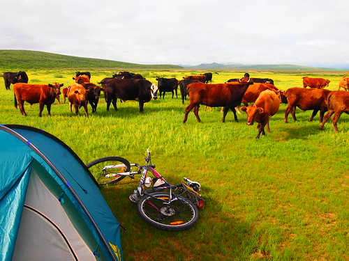 Camping between Gurvanbutag and Hashaat
