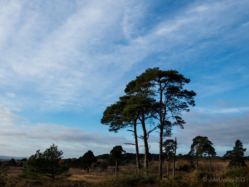 Pretty skies over Canford Heath