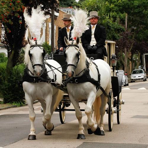 Two lovely horses