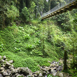 07 Viajefilos en Australia. Dorrigo Rainforest NP 43