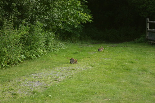 Rabbits just chillin