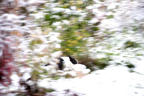 Arriba Arriba Andele Andele Andele che c'è la neve!