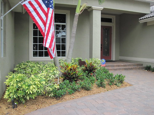 Front entryway looks much better with new plants