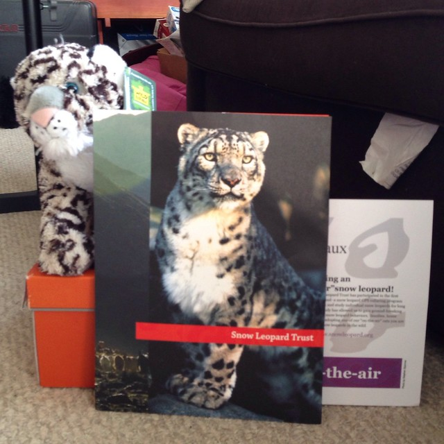 Adopted Snow Leopard