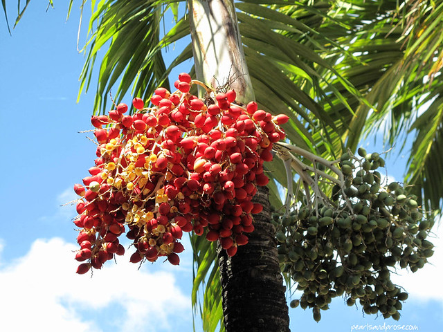 st_thomas_palm_flowers_web