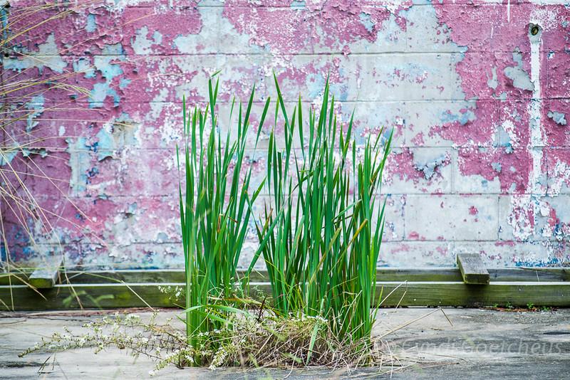 wabi sabi grass