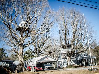 Gaffney Treehouse-001