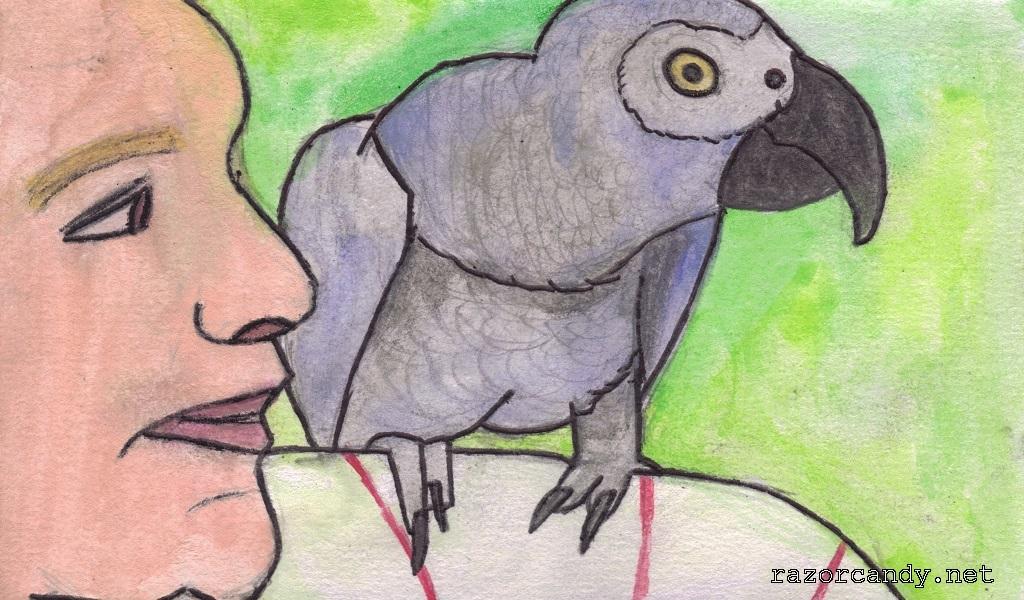 26-09-2013 Grey African Parrot