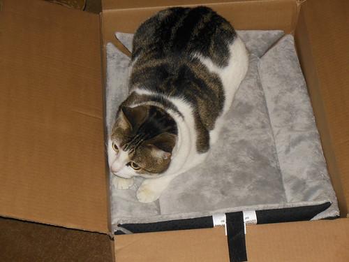 Dido in a box