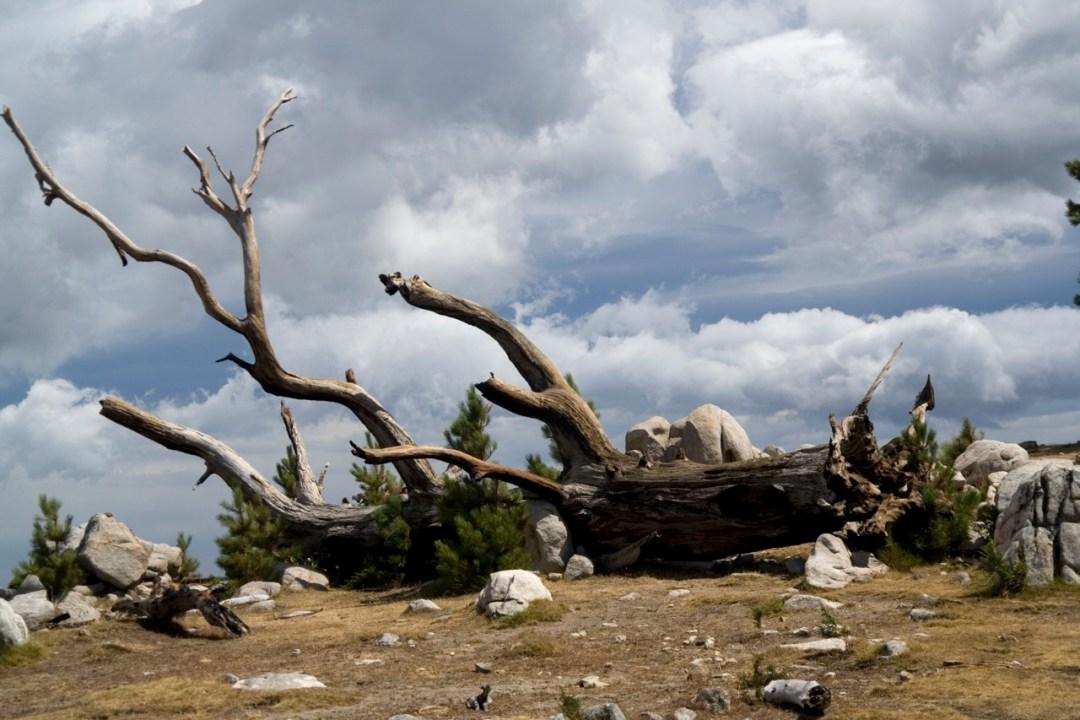 7. Naturaleza muerta. Autor, Jonay Galván