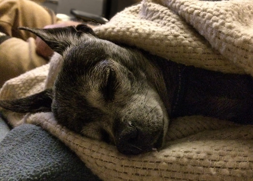 Betty Sleeping 1 by dagnyg