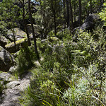 06 Viajefilos en Australia. Cathedral Rock NP 29