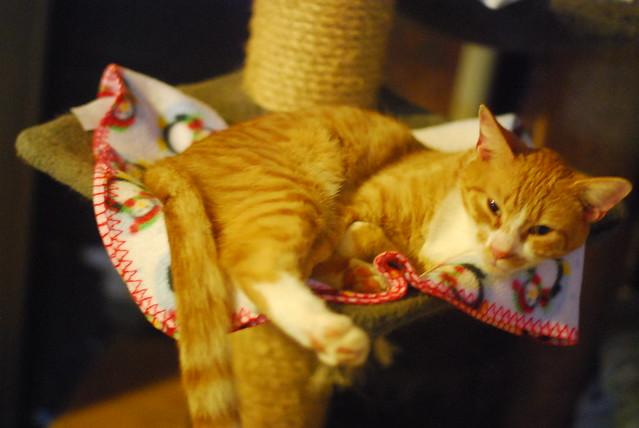 goathouse cat refuge: orange