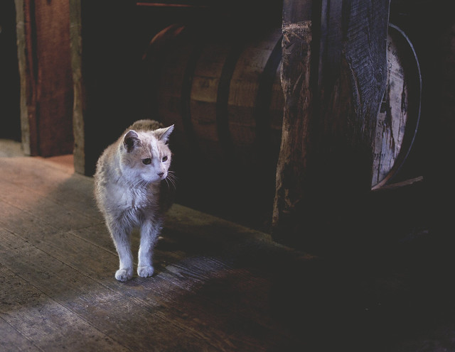 the bourbon cat, woodford reserve, versailles, ky