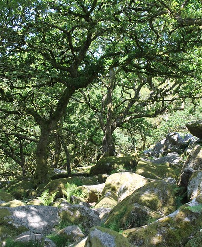inside wistman's wood