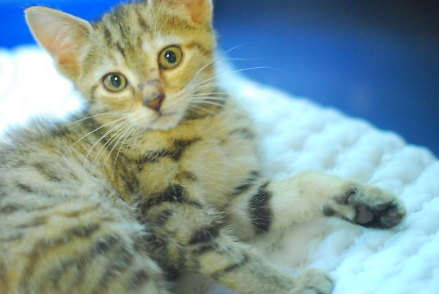goathouse cat refuge: kissing kitten faces