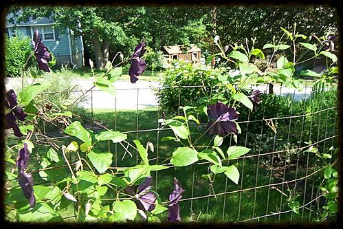 21June2013-garden0002