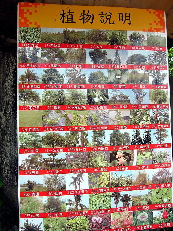 大樹舊鐵橋生態公園 (28)