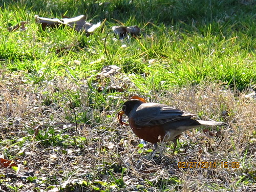 The Red Breast has a Worm by Rosa Blue