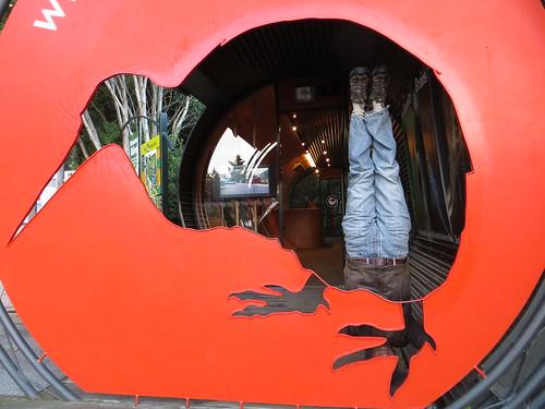 54. kiwi birdlife park headstand