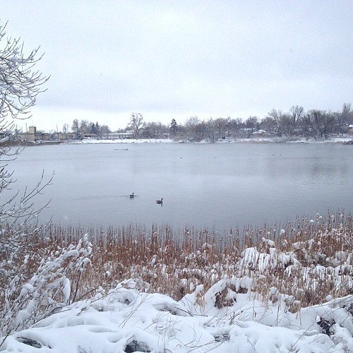 Lone ducks by @MySoDotCom
