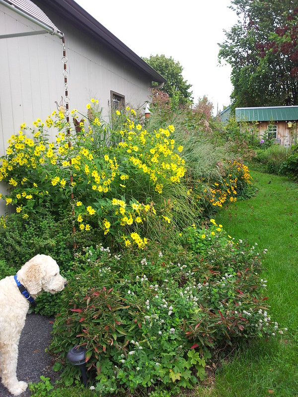 Mojo Smells the Flowers
