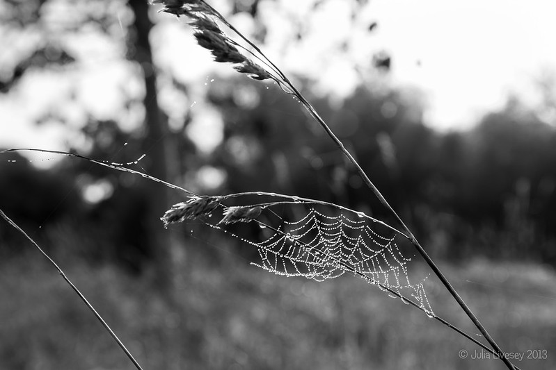 Cobweb on grass