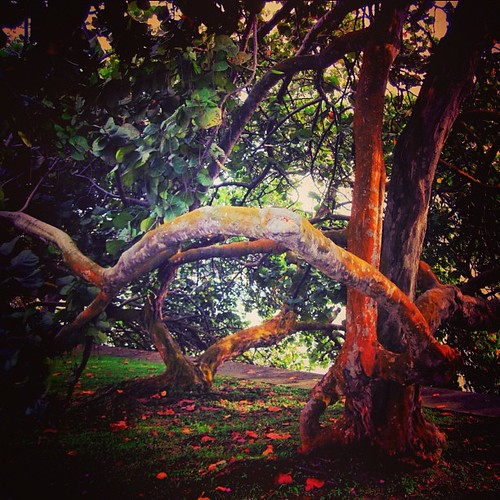 #tree along the banks of #marinabay #singapore near the F1 grandstand by @MySoDotCom