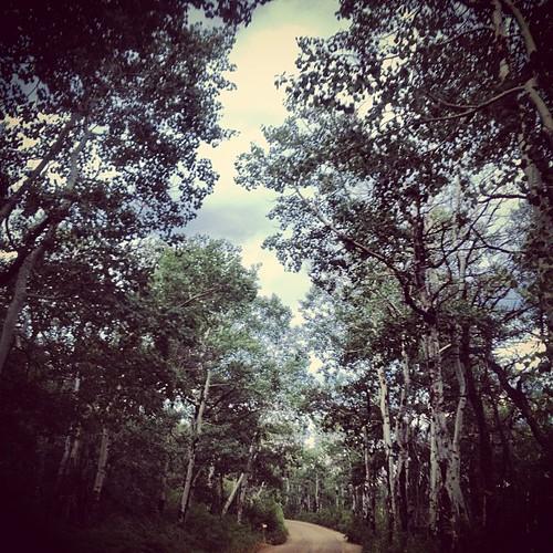 Forest Road #colorado by @MySoDotCom