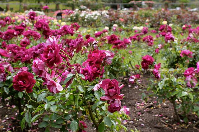 Monday: long weekend - brunch at the botanical gardens
