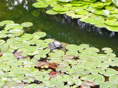 2013-06-16 Sonnenberg Gardens 007