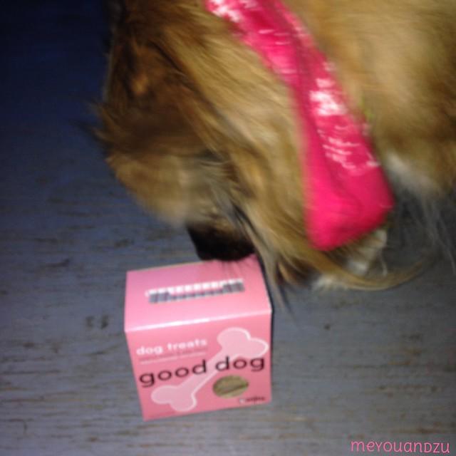 Sojo's treats