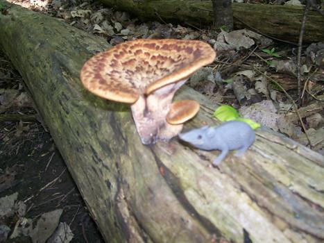 mushroom_photo