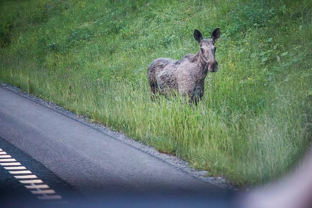 Roadtrip til Kristiansund #045