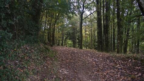 Forest and saint Val?©ry near St. Vaury