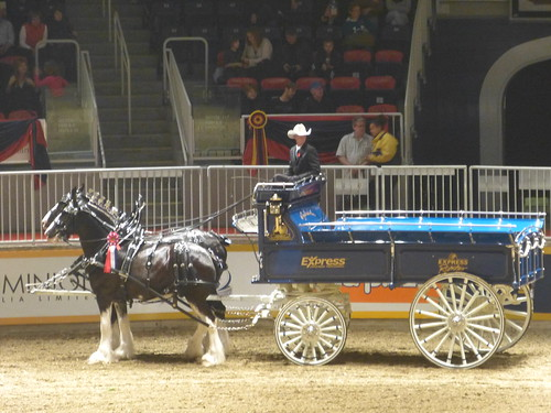 Royal Winter fair 2013 toronto
