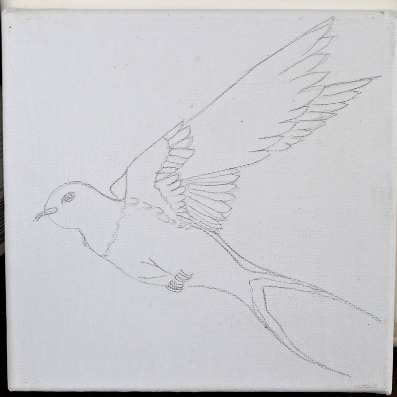 barn swallow (LH)