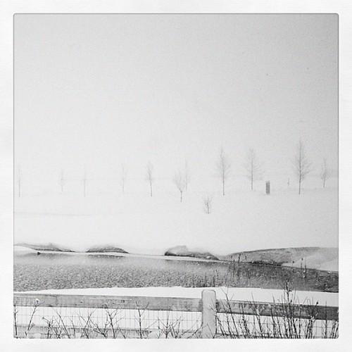 Denver Snow #colorado #gang_family #snow by FixedOpsGenius