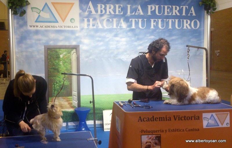 Expo canina Sevilla 2013 (35)